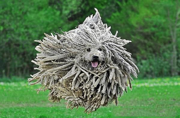 Strangest Looking Dog Breeds