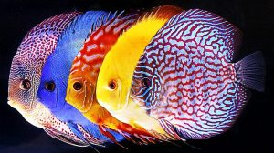 5 Most Exotic Freshwater Fish